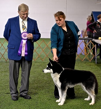 missions-first-dog-show4